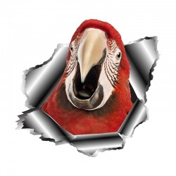 3D parrot - vinyl car sticker 13 * 12.5cm